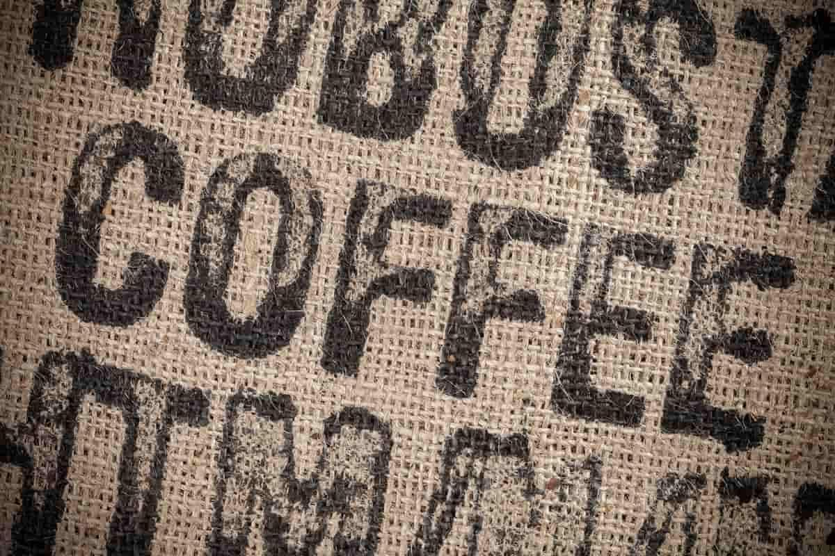 kaffeepflanze deko