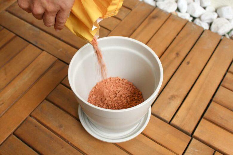 Kaffeepflanze im Blumentopf Tongranulat
