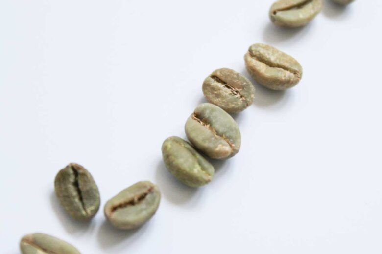Kaffeepflanze aus Samen ziehen