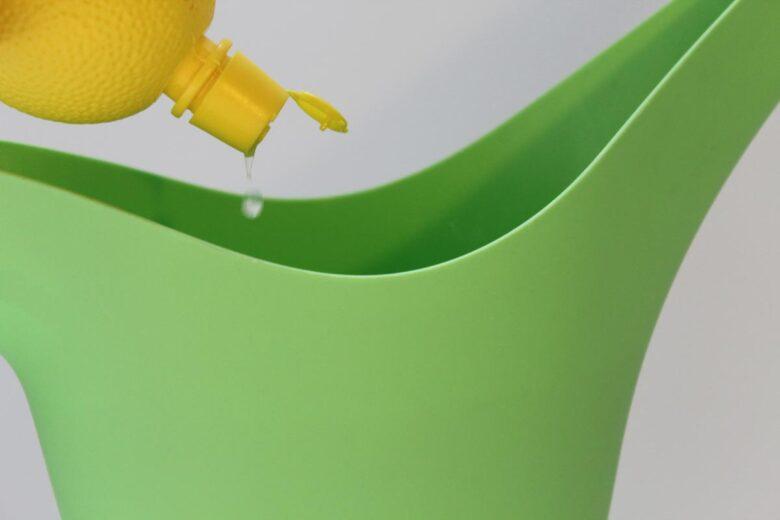 Kaffeepflanze Zitronensaft gießen
