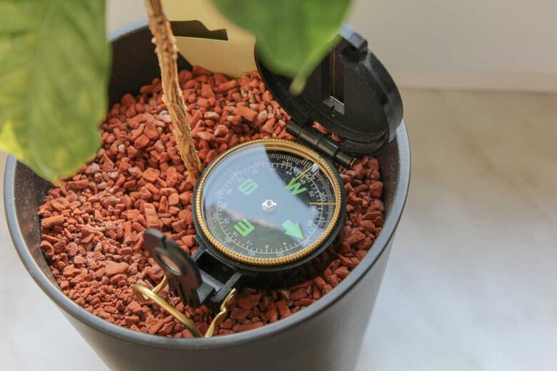 Kaffeeplanze Standort Licht Osten Westen Fenster