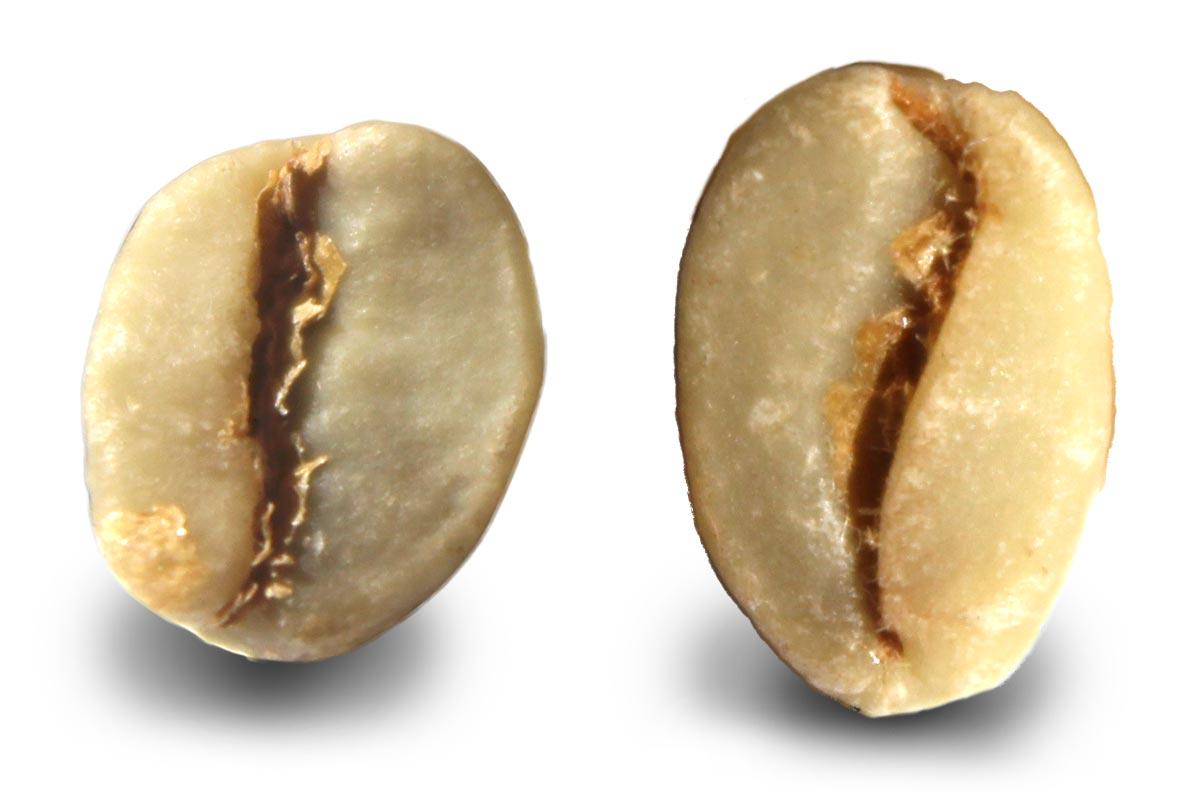 vergleich kaffeebohne arabica robusta